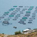 Fishing industry: Air treatment and ventilation of commercial fish tanks